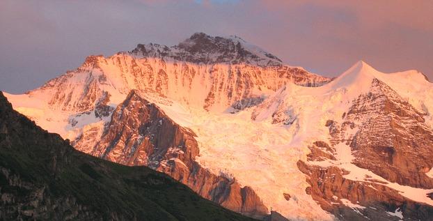 Spitzbergens Schneealgen im Dienste der Medizin-