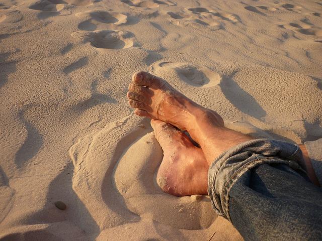 Die Sandmücke - Winzling und Krankheitsüberträger