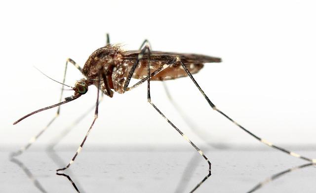 Mückenschutz – Warum Schutz gegen Mücken wichtig ist