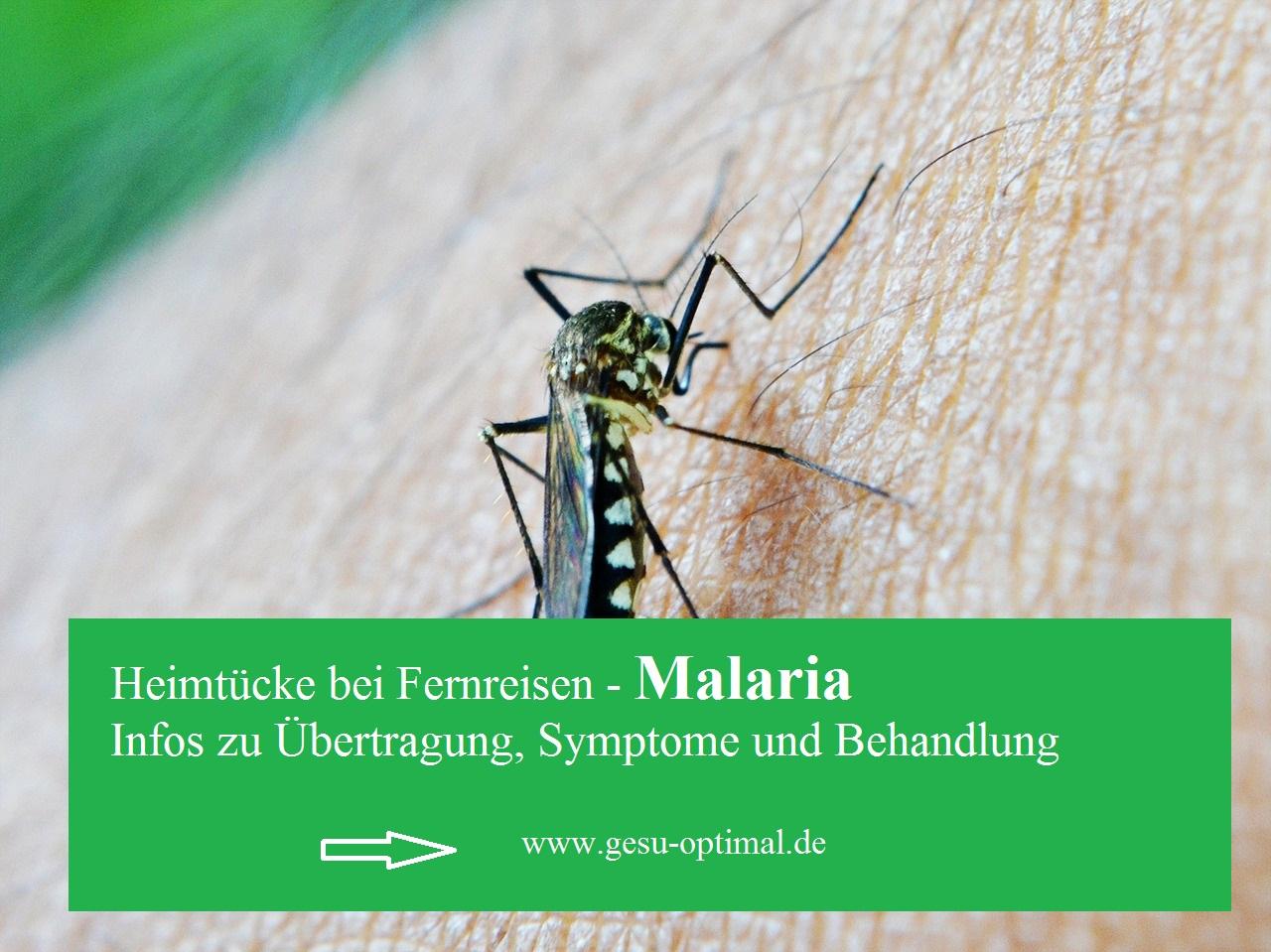 Malaria – warum infizierte Moskitos gefährlich sind
